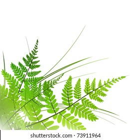 fern with grass over white background, copyspace