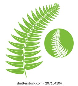 Fern. Isolated leaf on white background. Vector illustration