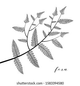 Fern leaf. Botanical leaves branch isolated on background. Elegant skeleton object design in black color. Modern minimalism style, perfect for print or poster