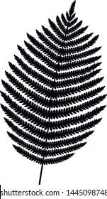 Fern leaf silhouette. Fern frond black silhouette. Vector illustration.