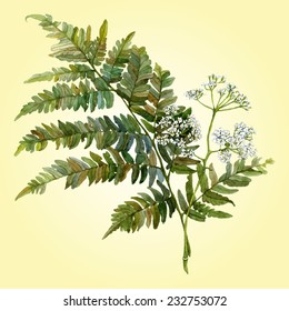 Fern leaf vector image. Branch of white aegopodium flowers on bright background