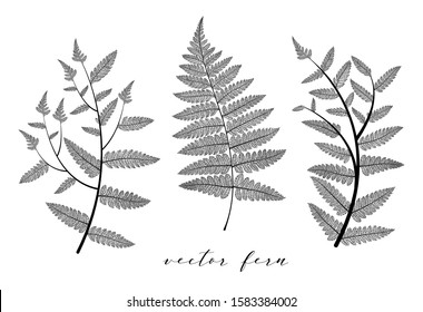 Fern leaf vector set. Botanical leaves branch collection isolated on background. Elegant skeleton objects design in black color. Modern minimalism style, not autotrace