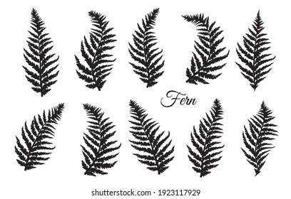Fern leaves set. Vector illustration.