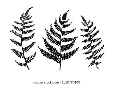 Fern leaves are a simple vector set. Isolated black silhouette.