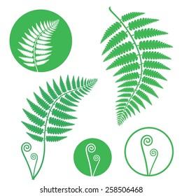 Fern logo. Abstract fern on white background