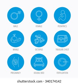 Fertilization, pregnancy and pediatrics icons. Baby child, whale and octopus linear signs. Treasure chest, double bed icons. Blue circle buttons set. Linear icons.