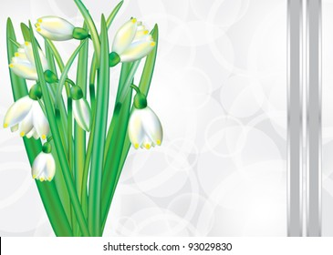 Festive card with blooming snowdrops. EPS 10.