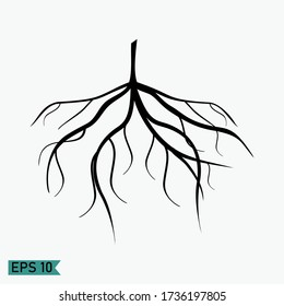fibrous roots, with a flat style design. illustration of fibrous roots. plant theme
