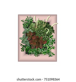 Ficus dwarfish (Ficus pumila L.), fittonia (Fittonia argyroneura L.)(Fittonia Verschaffeltii L.), peperomia wrinkled (Peperomia caperata L.) in a frame for vertical gardening, the color vector image