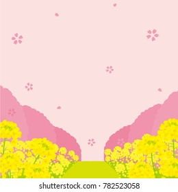 field of canola flower and row of cherry blossom trees illustrations
