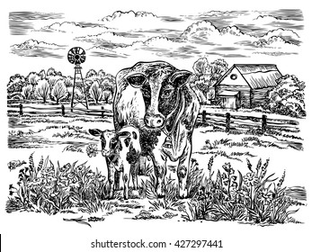 Field with cows. Vector hand drawn graphic illustration. Rural landscape.