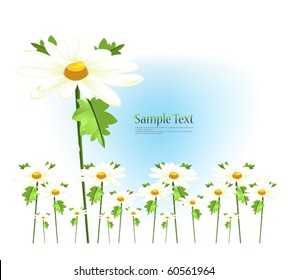 Field of daisies decorated postcard