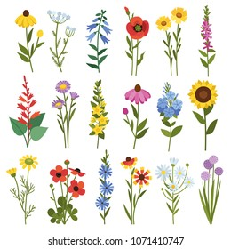 Field flowers and grass. Poppies, chamomile, daisies, bells, echinacea, sunflower, buttercups and other wild flowers.