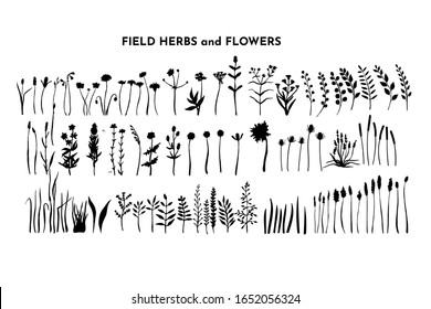 Field plants bundle. Meadow flowers set. Grass and weed collection. Branches and twig. Botanical drawing. Vector hand drawn silhouettes isolated on white.