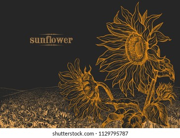Field of sunflowers and large flowers in the foreground on  a black background.Hand-drawn vector  illustration in vintage style.  Floral template.