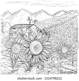 field with sunflowers sketching graphics