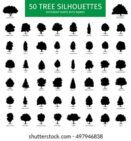 Fifty different tree sorts with names. Silhouette illustrations of tree types and specimens. Ash, fir, oak, walnut, chestnut, cherry, apple tree, maple, pine, larch, birch, spruce, aspen & other.