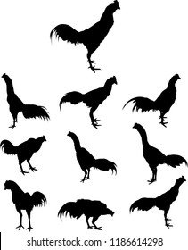 Fighting cock silhouette vector. Animal in black and white concept.