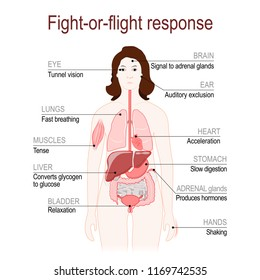 fight-or-flight response is a physiological reaction that occurs in response to threat to life. stress response system. female silhouette with highlighted internal organs. Vector diagram
