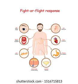 fight-or-flight response is a physiological reaction that occurs in response to threat to life. stress response system. human silhouette with highlighted internal organs. Vector diagram