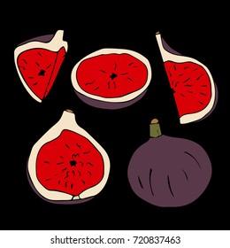 Figs set vector illustration. Doodle style. Design icon, print, logo, poster, symbol, decor, textile, paper