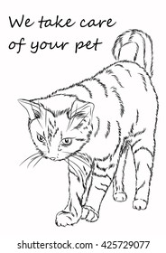 Figure cat. It can be used for advertising cattery, veterinary clinic or other