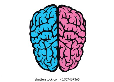 The figure of human brain separates half blue pink background. The concept of male and female brain. The idea for brain union or difference of man and woman in love, life, science, medicine or anatomy