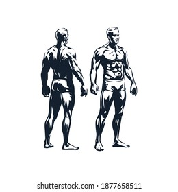 The figure of a muscular man. Anatomy of a man. Male front and back views. Stylized vector illustration.