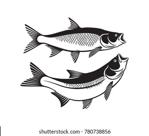 the figure shows the  asp fish