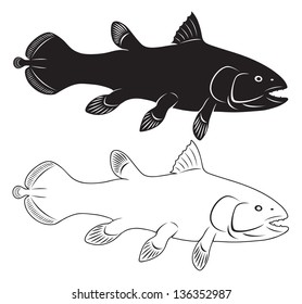 the figure shows the coelacanth
