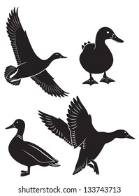 the figure shows the duck