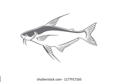 The figure shows a fish pangasius