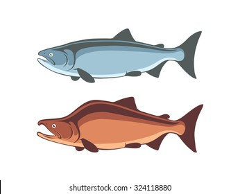 the figure shows the fish salmon