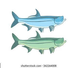 The figure shows a fish tarpon