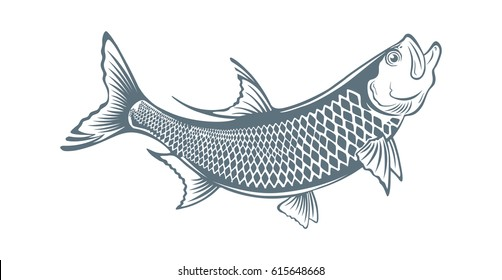 The figure shows a fish tarpon