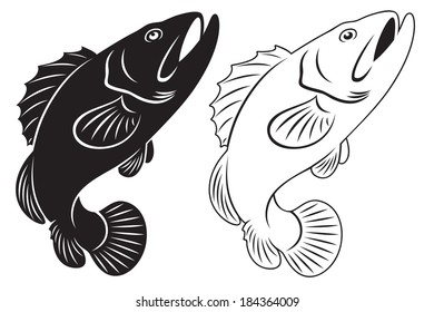the figure shows the grouper fish