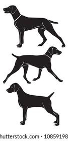 the figure shows a Weimaraner dog