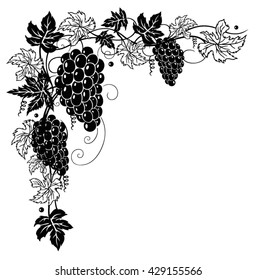 Filigree vine leaves with grapes, vector decoration.