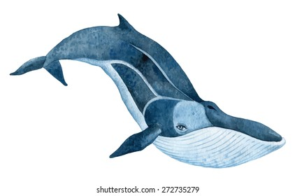 fin whale - hand drawn watercolor vector illustration