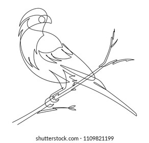 Finch Continuous Line Vector