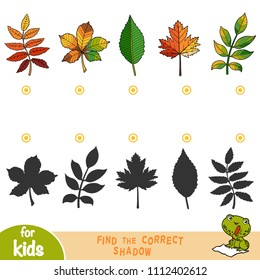 Find the correct shadow, education game for children, set of leaves