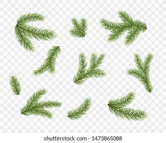 Fir branches isolated on transparent background. Pine tree, xmas evergreen plants elements. Vector Christmas tree green decoration set.