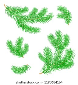 Fir branches.  Set of Christmas tree branches. Symbol of Christmas and New Year. Isolated. Vector