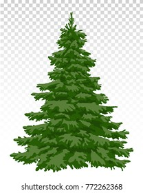 Fir. Pine. beautiful Christmas tree. Christmas. Winter. Nature in details. Drawing. Vector. Eps 10.