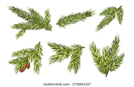 Fir Tree Branches with Fir Cones Hanging from It Vector Set