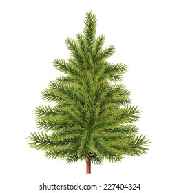 fir tree vector illustration