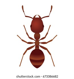 fire ant.