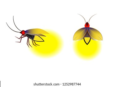 Fireflies logo icon vector illustration. Beautiful firefly spread wings and light at the end of the body. design Insect beetle firefly.