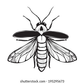 Firefly Insect Black Inky Drawing. Bug glowworm or lightning bug illustration. Vector EPS8.