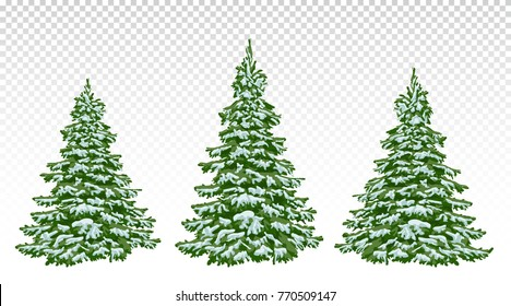 Christmas Tree Transparent Background.Tree Transparent Background Stock Vectors Images Vector